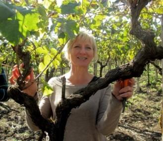 Trimming the Vines, Puglia