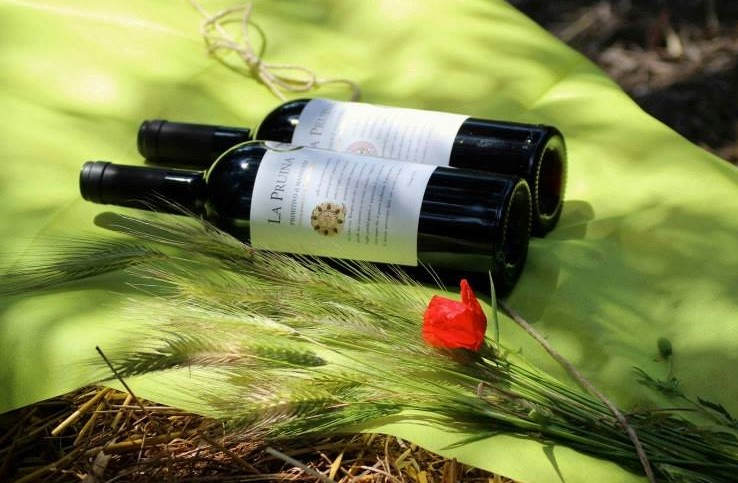 Premium award winning wines, Puglia